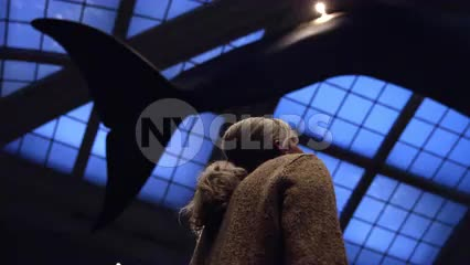 woman looking up at great blue whale in Natural History Museum on ceiling in 1080 HD and 4K in NYC