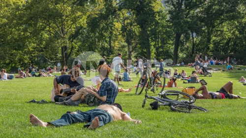 Central Park in summer - people laying on grass sunbathing on sunny day