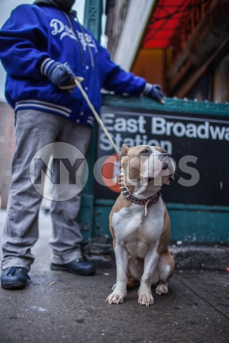 dog and man in Dodgers jacket - Pit Bill on leash on Lower East Side outside East Broadway F Train subway station in winter