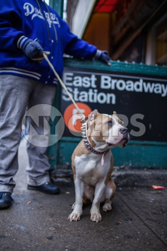 man and his dog with spiked collar - Pit Bill on leash on Lower East Side outside East Broadway F Train subway station in winter
