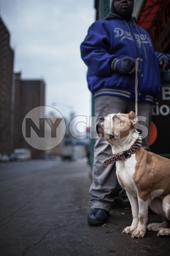 Pit Bill on leash on Lower East Side with projects outside East Broadway F Train subway station in winter