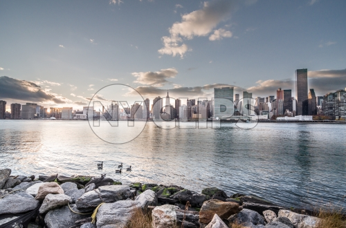 ducks in East River - view from Brooklyn with rocks in foreground and Manhattan skyline in background at sunset in early evening