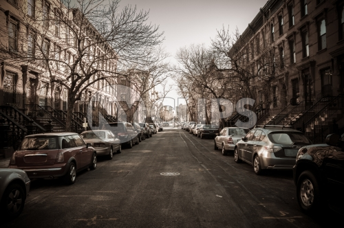 treelined street in winter with bare trees in Harlem - cars parked on quiet block