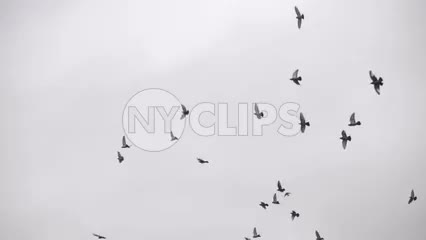 flock of birds flying on cloudy sky around Washington Square Park on rainy day, people with umbrellas - raining