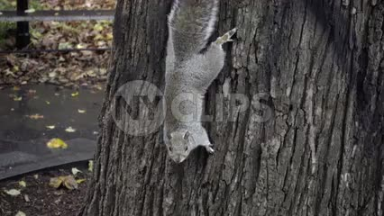 cute squirrel on tree in slow motion