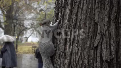 squirrel hanging out on tree in Washington Square Park
