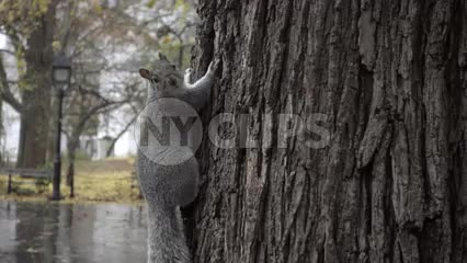 squirrel shaking rain off head in slow motion in Washington Square Park