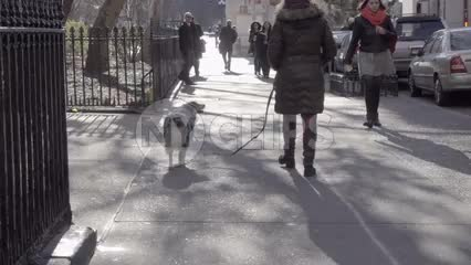 woman walking dog toward Washington Square Park on cold sunny winter day