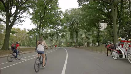 horse-drawn carriage, bicyclists in Central Park - people on bicycles in NYC on summer day
