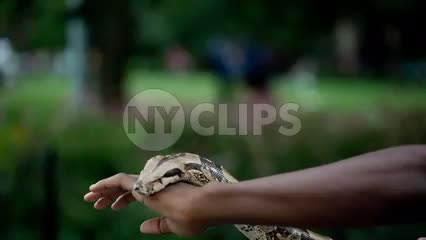 kid with large Boa constrictor snake in park on summer day in NYC