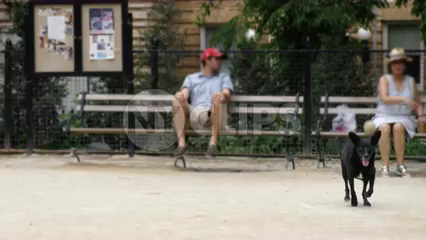 dog run - chasing ball and catching in his mouth in Washington Square Park in summer - slow motion 4K NYC