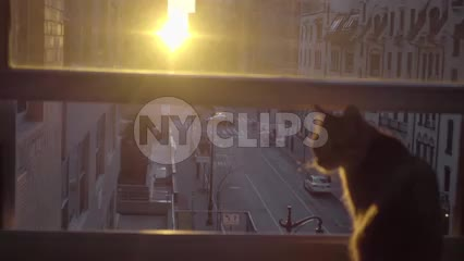 cat sitting on apartment interior window sill looking at sunset between buildings in New York City