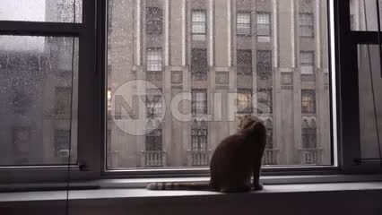 cat sitting on windowsill on rainy day interior Manhattan apartment - silhouette of kitten with raindrops on window