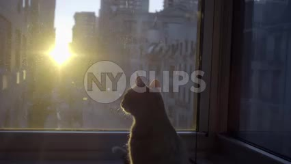 cat silhouette on windowsill during sunrise interior Manhattan apartment