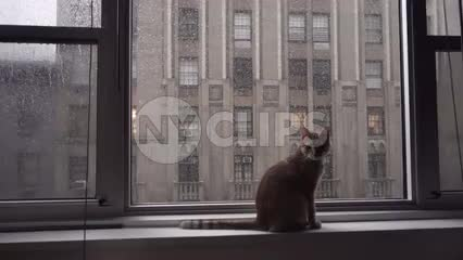 cat sitting on window sill on rainy day