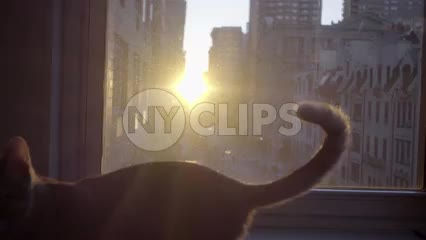 silhouette of kitten on window sill with sunset in background