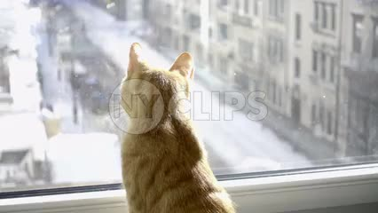 cat looking out window on snowy winter day in NYC