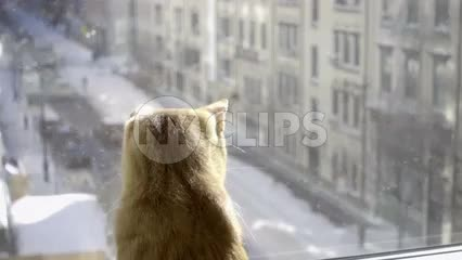 zooming out from cat interior window sill looking out on snow in street winter NYC