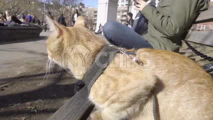 cute cat sitting on Washington Square Park bench in fall or spring during day in New York City