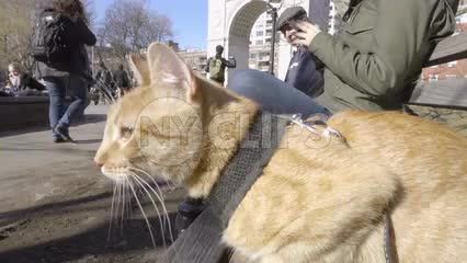 orange tabby cat sitting on park bench in Washington Square in fall winter with arch